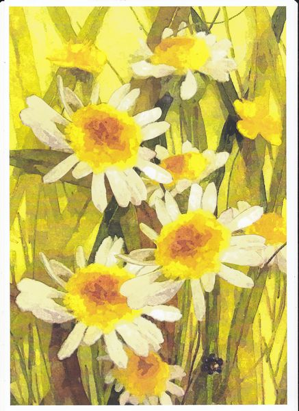 Daisies in Grass Including Project - 56 Pages to Download