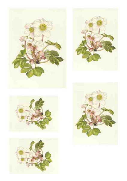 Christmas Rose Toppers Download - 10 Pages