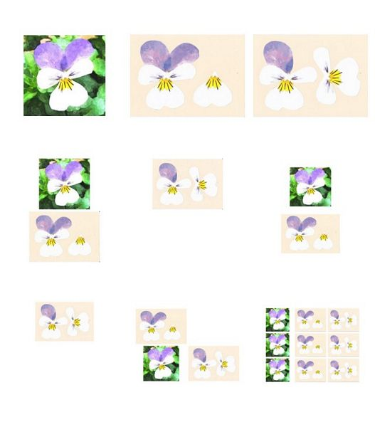 Pansy 3D Project 02 - 9 Pages to Download